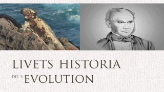 Livets historia: Evolution