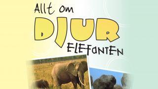 Allt om djur: Elefanten