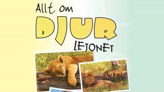 Allt om djur – Lejonet
