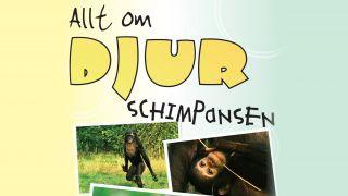Allt om djur – Schimpansen