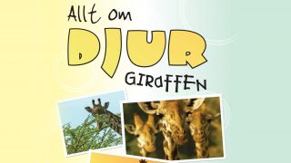 Allt om djur – Giraffen