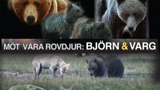 Möt våra rovdjur – Björn och varg