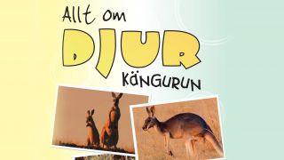 Allt om djur – Kängurun