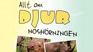 Allt om djur – Noshörningen
