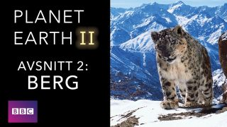 Planet Earth II – Del 2: Berg