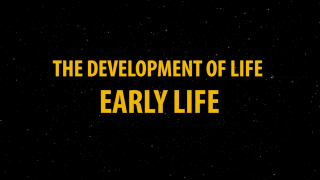Development of Life: Early Life