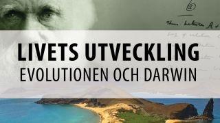 Livets utveckling: Evolutionen och Darwin