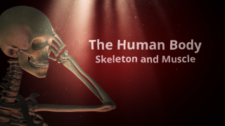 The Human Body: Skeleton and Muscle