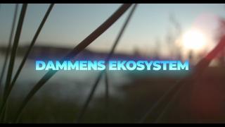 Dammens ekosystem