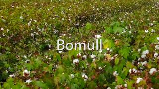 Bomull