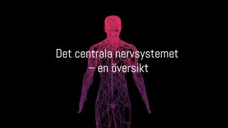 Det centrala nervsystemet – en översikt