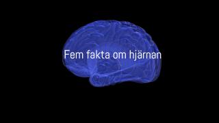 Fem fakta om hjärnan
