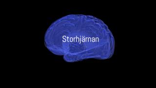 Storhjärnan