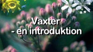 Växter – en introduktion