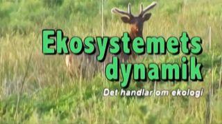 Det handlar om ekologi, del 2: Ekosystemets dynamik