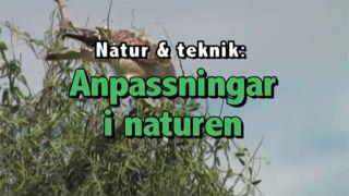 Anpassningar i naturen