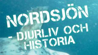Nordsjön – Djurliv och historia