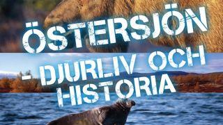Östersjön – djurliv och historia