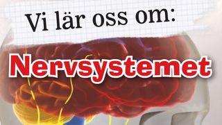 Vi lär oss om: Nervsystemet