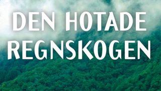 Den hotade regnskogen