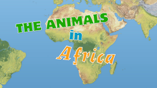 The Animals in Africa