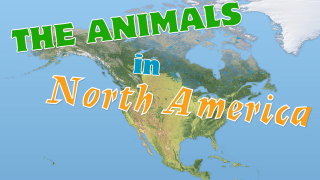 The Animals in North America