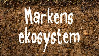 Markens ekosystem