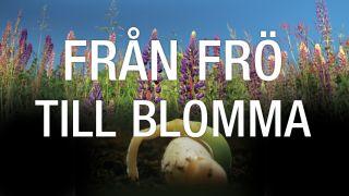 Från frö till blomma