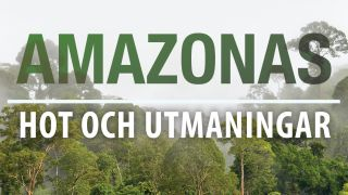 Amazonas: Hot och utmaningar