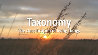 Taxonomy - The Classification of Living Things