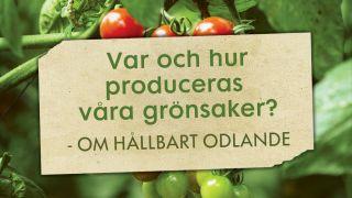 Var och hur produceras våra grönsaker? - Om hållbart odlande