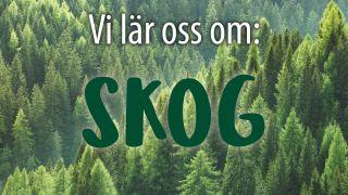 Vi lär oss om: Skog