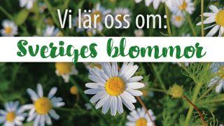 Vi lär oss om: Sveriges blommor