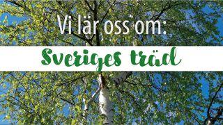 Vi lär oss om: Sveriges träd