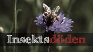 Insektsdöden